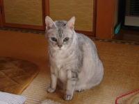 三鷹武蔵境タイ式腰痛マッサージ